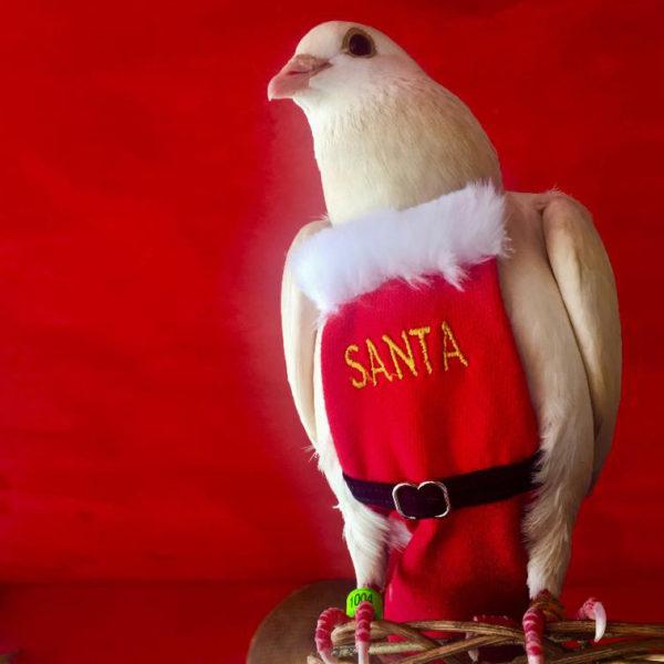 Flyper - Avian / Bird Diaper from Bev's Bird Boutique